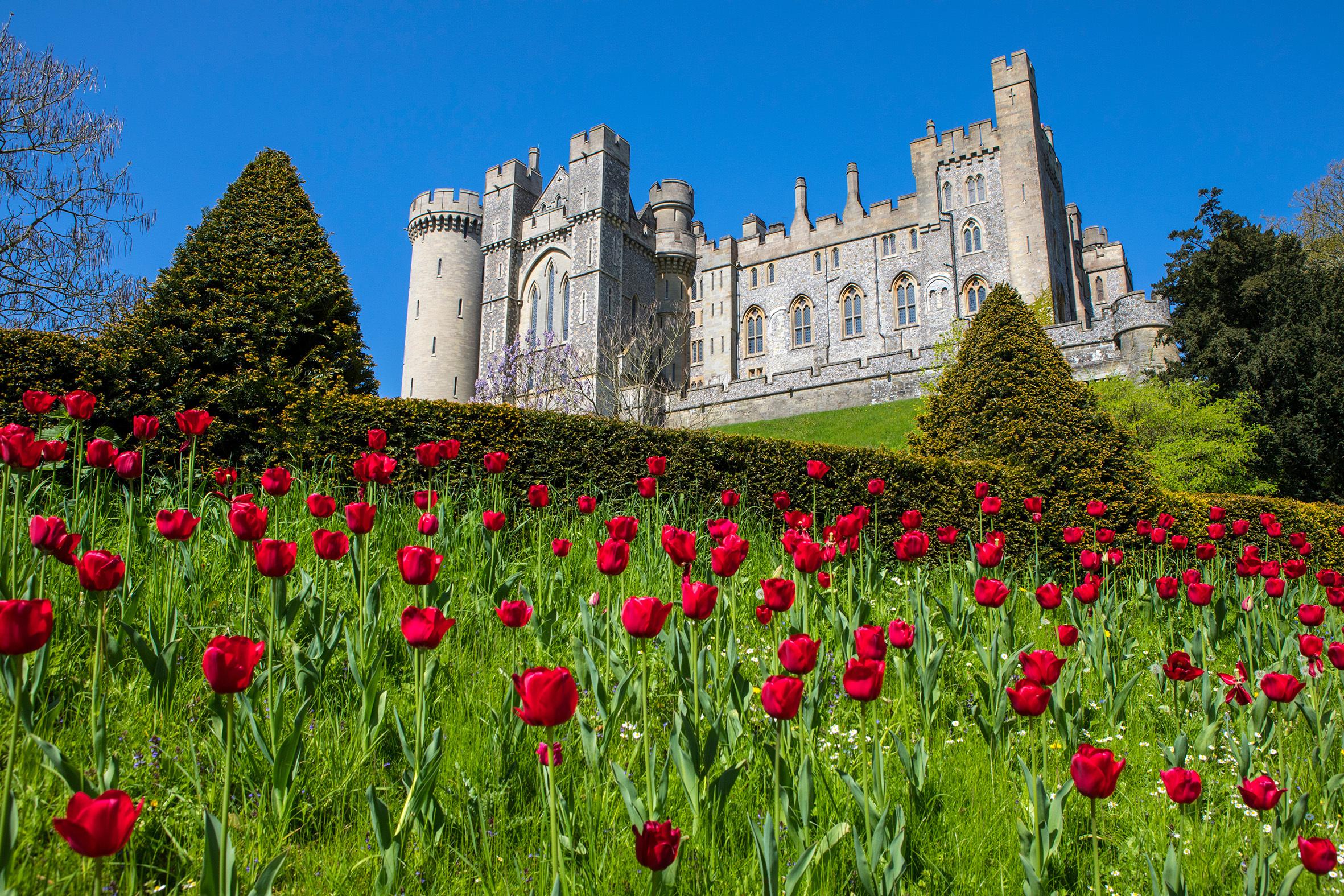 Tulips at Arundel Castle