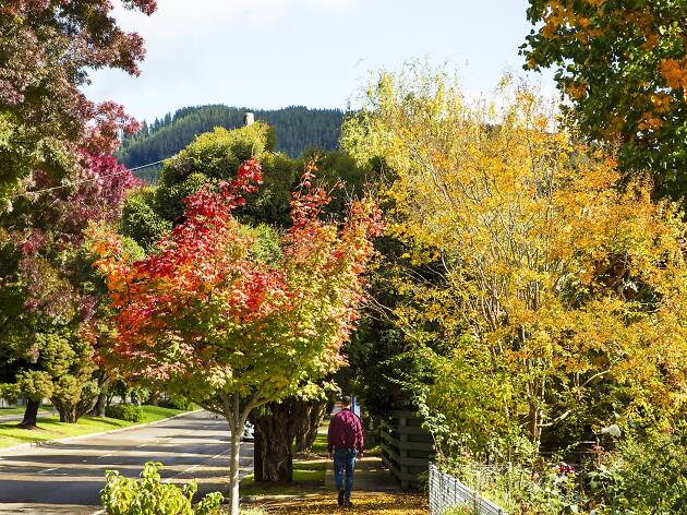 The best places to see autumn leaves in Victoria