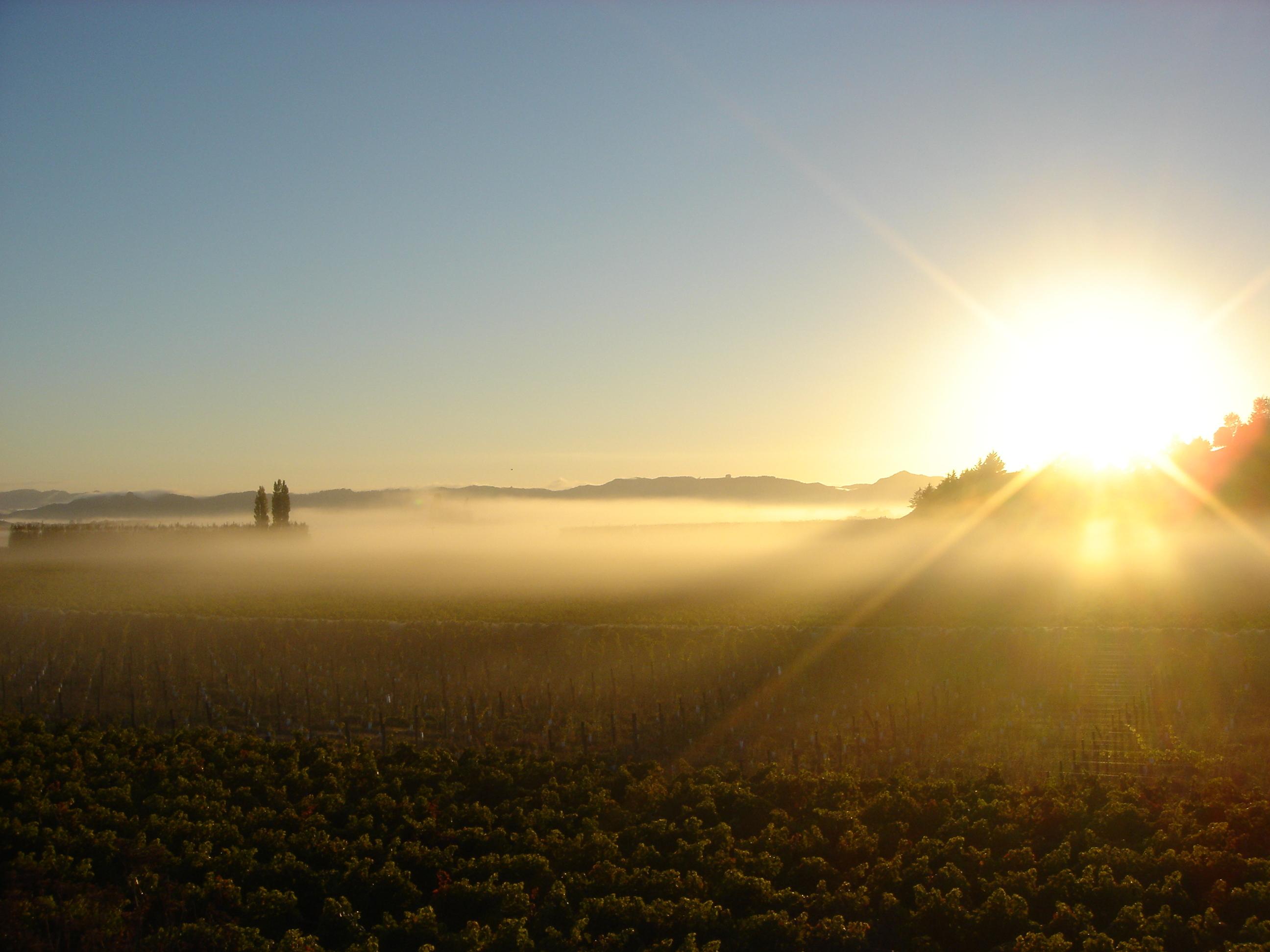 Sunrise on Kirkpatrick Estate