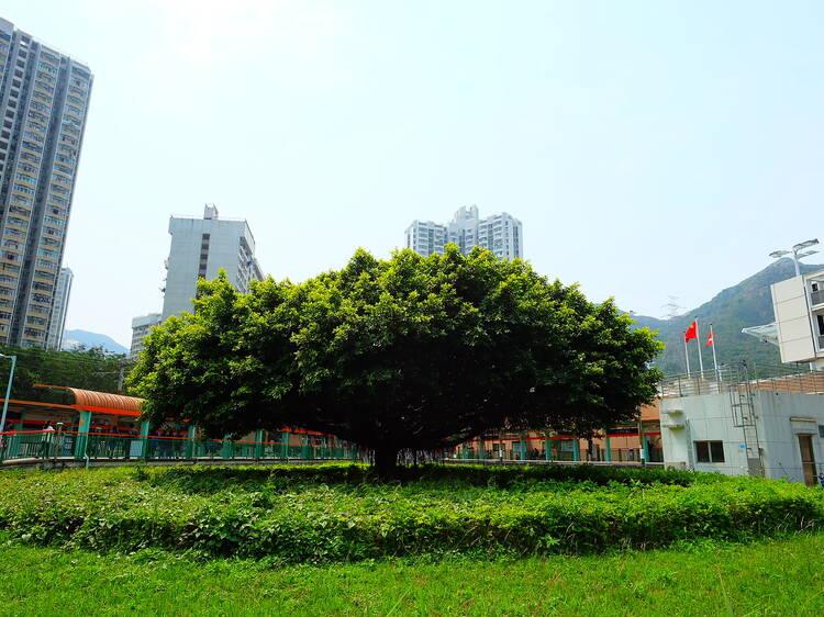 田景大樹:石屎中的綠意