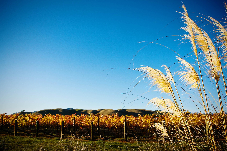Vineyards at Tohu Wines