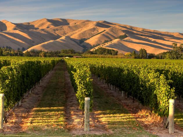 Vineyards at Giesen Wines