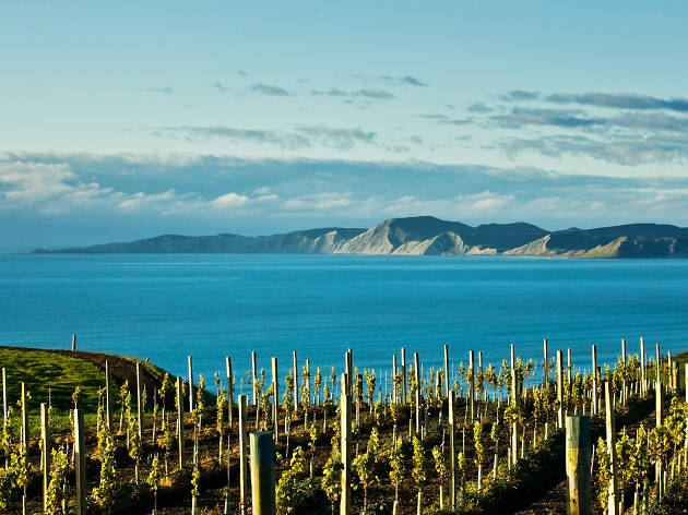 8 reasons to book a boozy New Zealand wine holiday