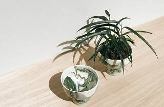 indoor potted plants bowls ceramics