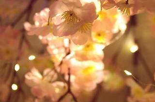 吉祥寺 夜桜