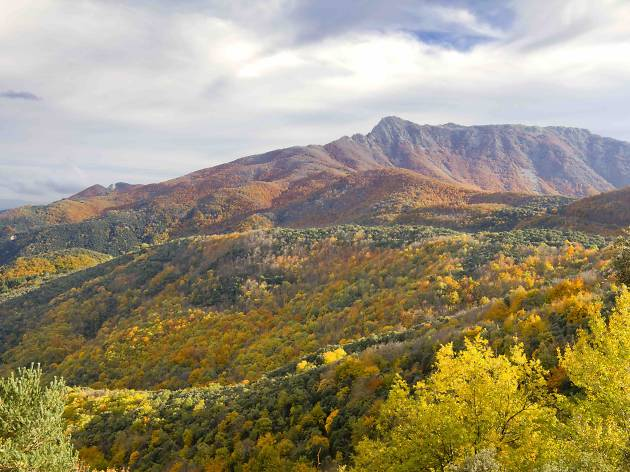 Montseny Natural Park in the fall with all  colours of trees in Catalonia (Spain)