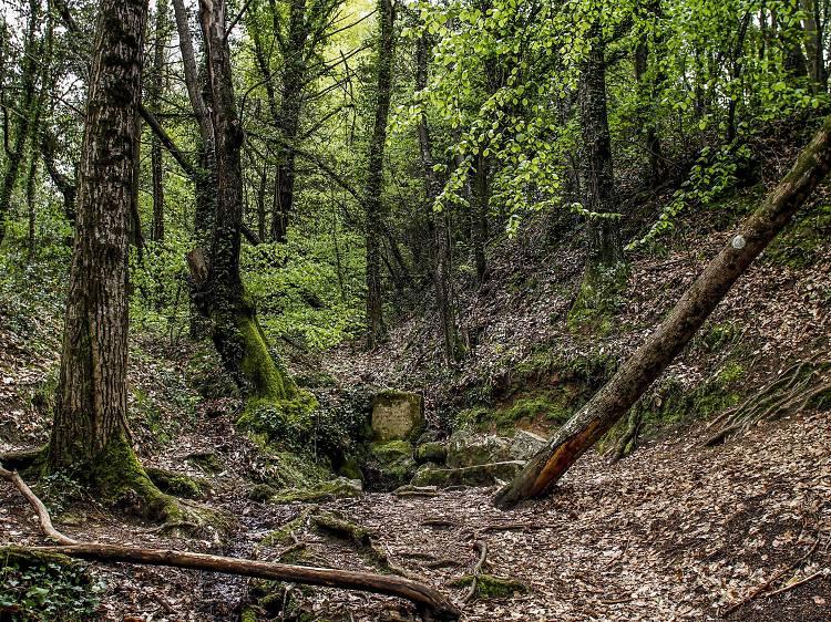Caminos de Serrallonga
