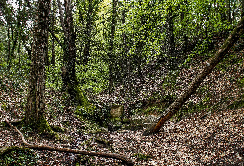 Boscos de Viladrau. Parc Natural del Montseny