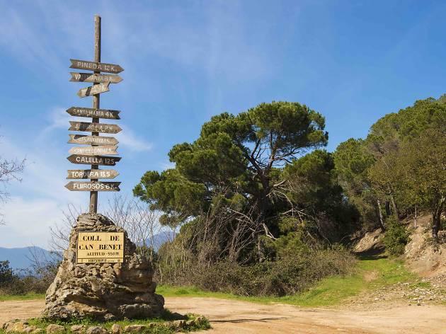 Coll de Can Benet. Parc Natural del Corredor Montnegre, Barcelona, Spain.