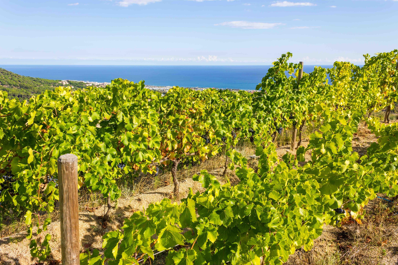 Alella wine region