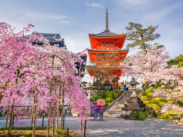 Cherry blossom in Kyoto, Japan