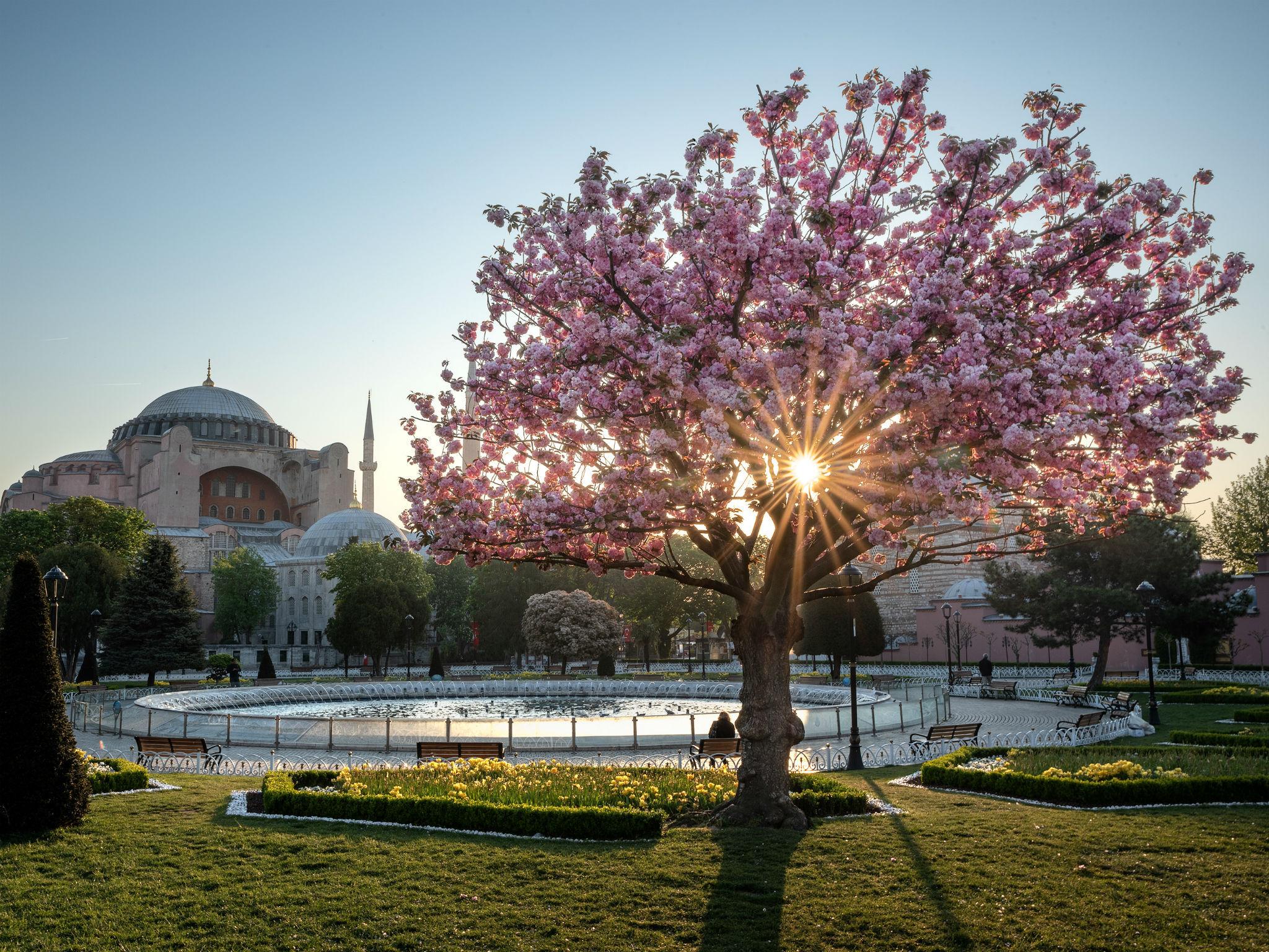 Cherry blossom in Istanbul, Turkey