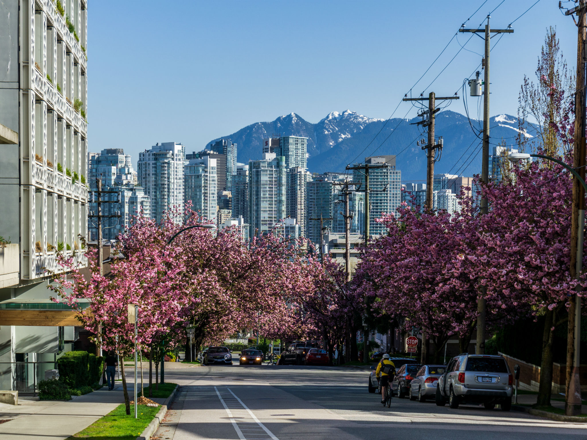 Cherry blossom in Vancouver, Canada