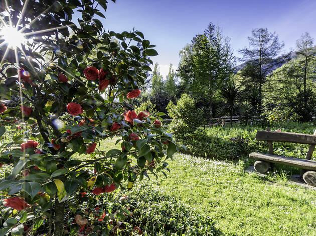 Camellia Park, Locarno, Ascona Locarno campaign