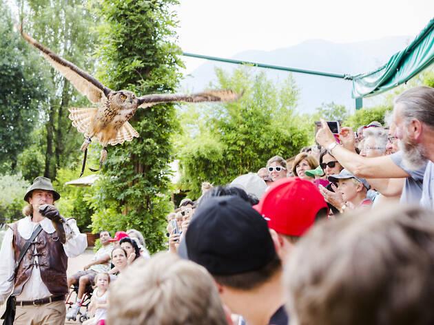 Falconry in Ticino - Ascona Locarno campaign