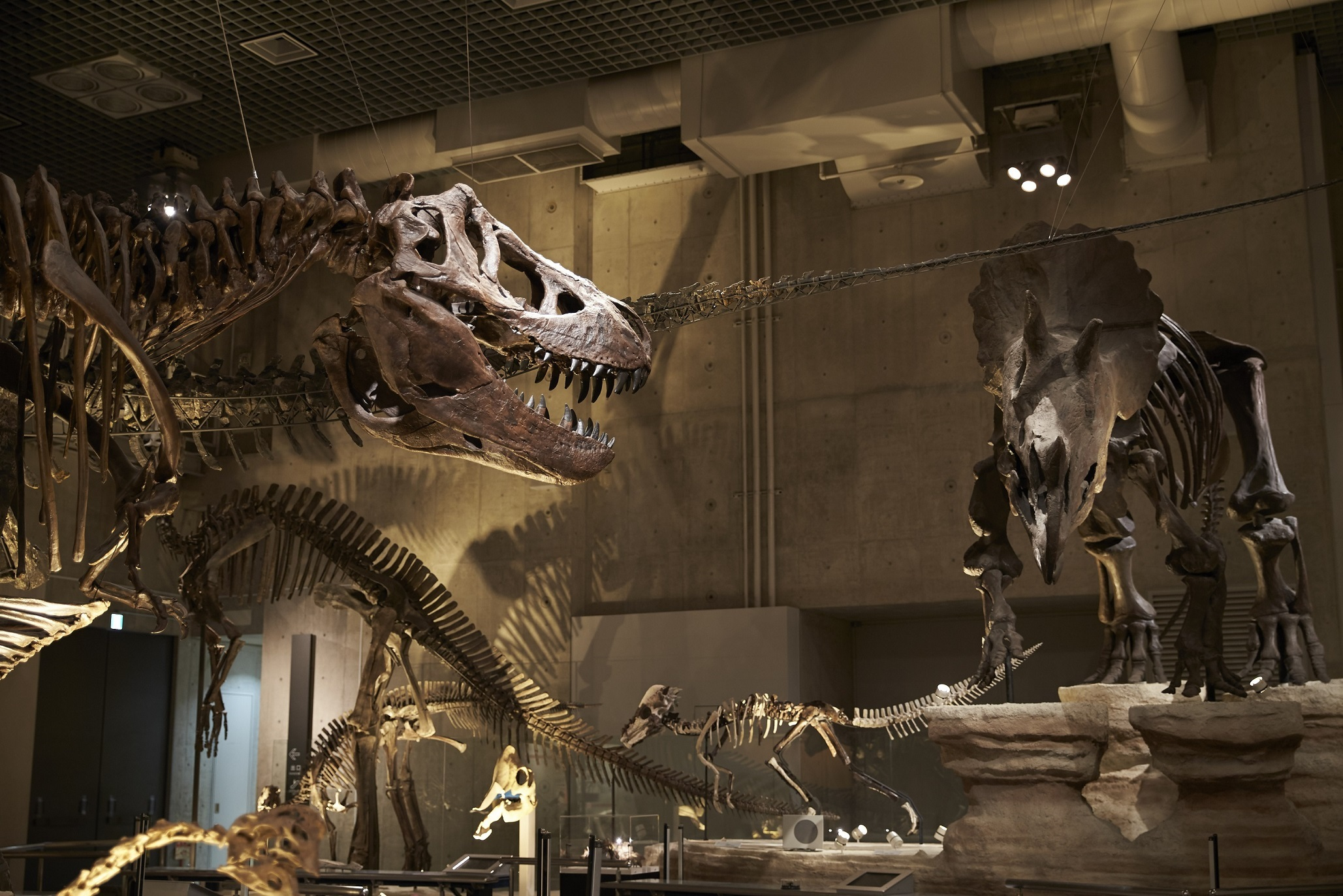 Best museums in Tokyo for kids and families