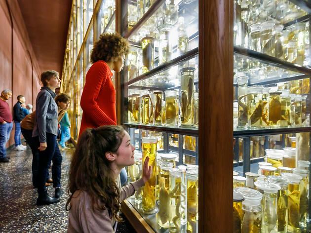 Museum für Naturkunde (Natural History Museum)