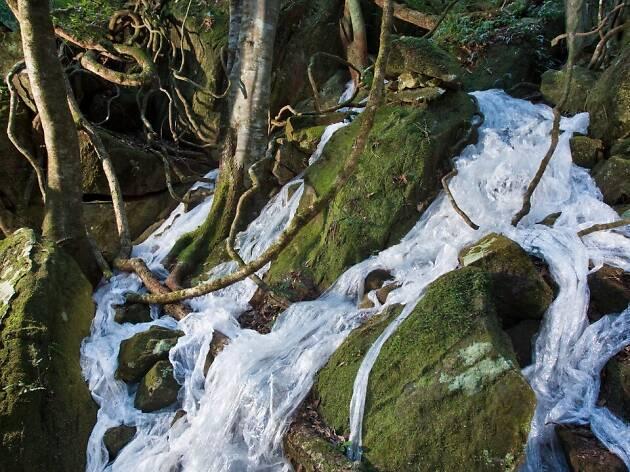 Elizabeth West, 'Cascade' Sculpture at Scenic World