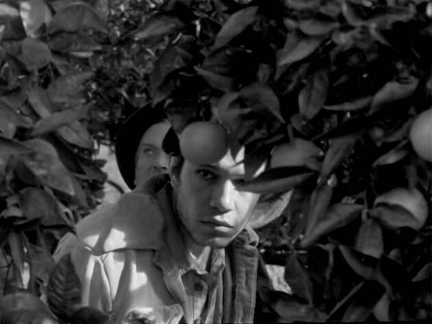Uma Abelha na Chuva (1972)