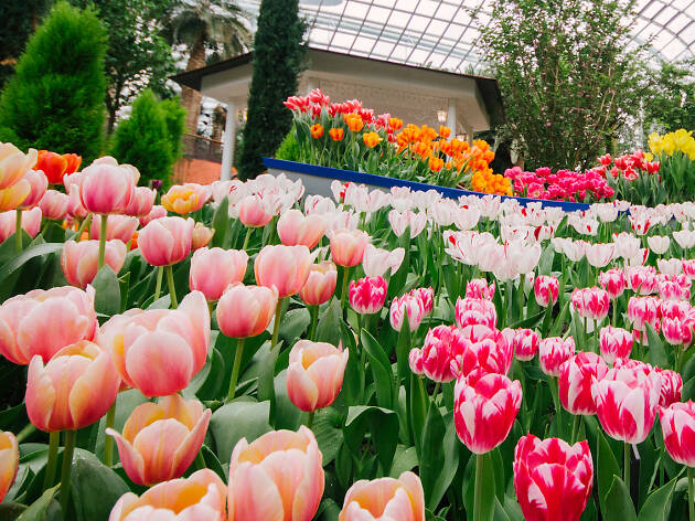 Tulipmania, Gardens by the Bay