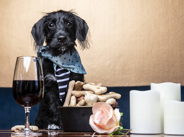 A dog sitting on a table with wine, candles and roses.