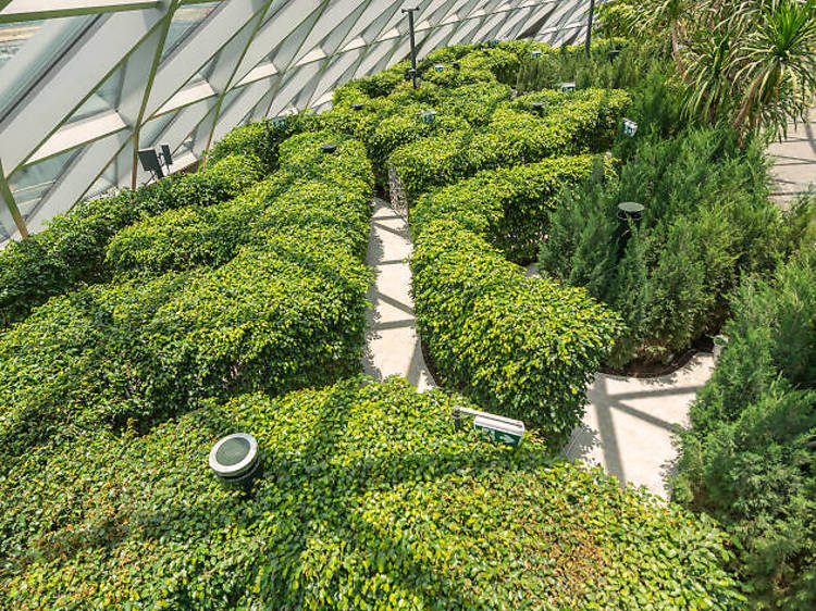 Get lost in Hedge Maze
