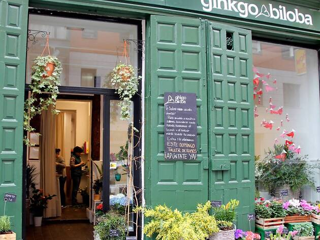 Gingko Biloba floristeria