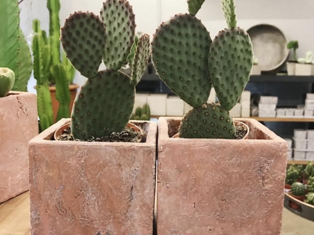 Cacto Cacto floristeria