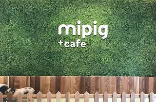 マイピッグカフェ