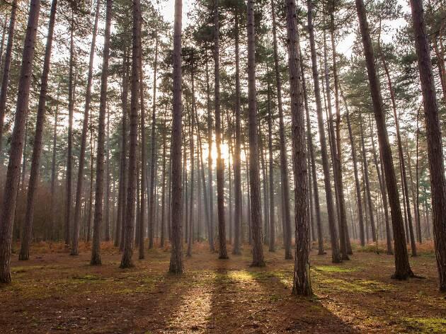 Black Park Forest