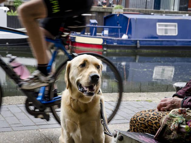Regent's Canal dog