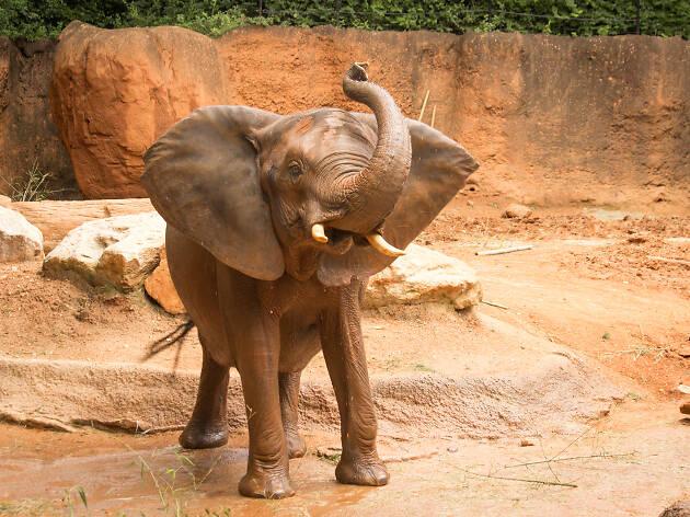 Zoo Atlanta