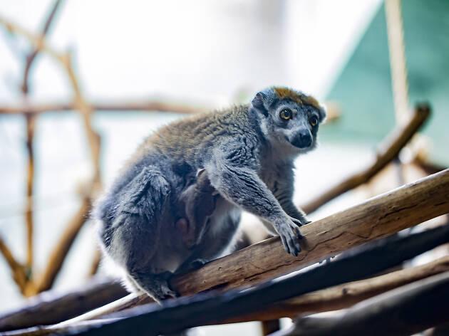 6. Ver animales (¡gratis!) en el Lincoln Park Zoo