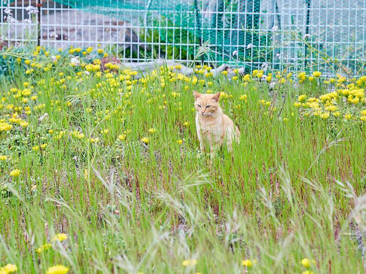 島の猫に挨拶する。
