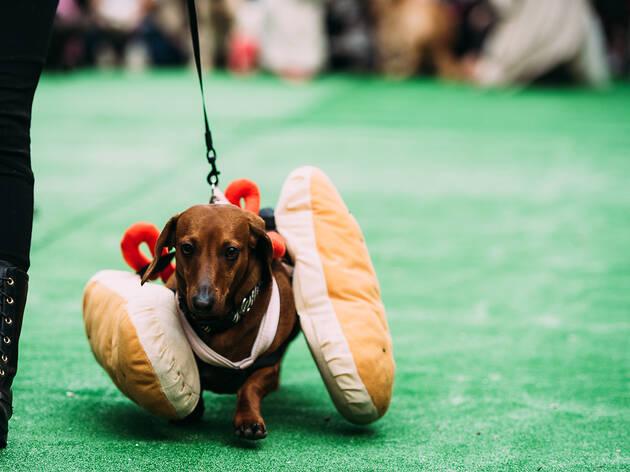 Barkly Barks Dog Festival