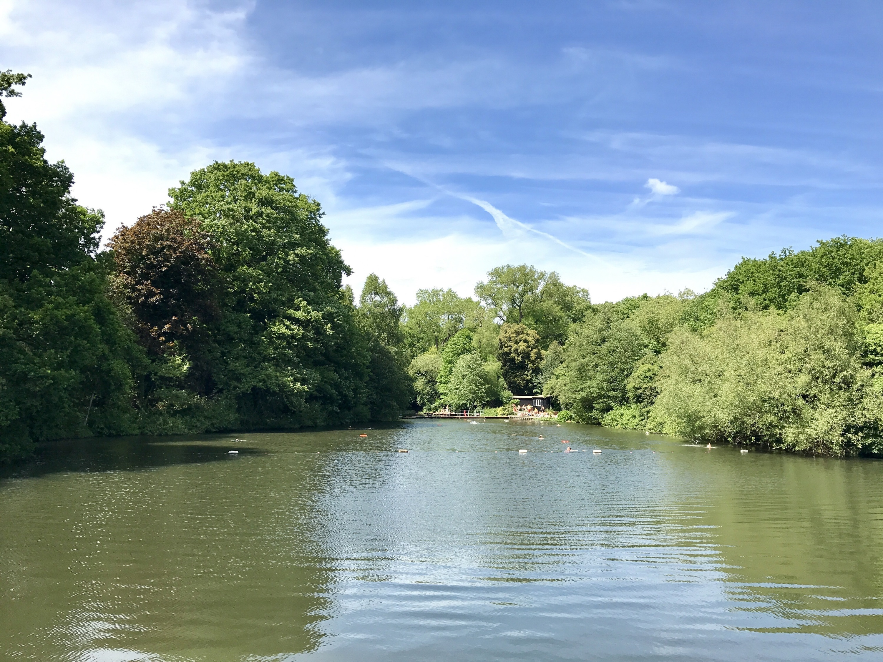 Hampstead Heath Bathing Ponds, mixed pond