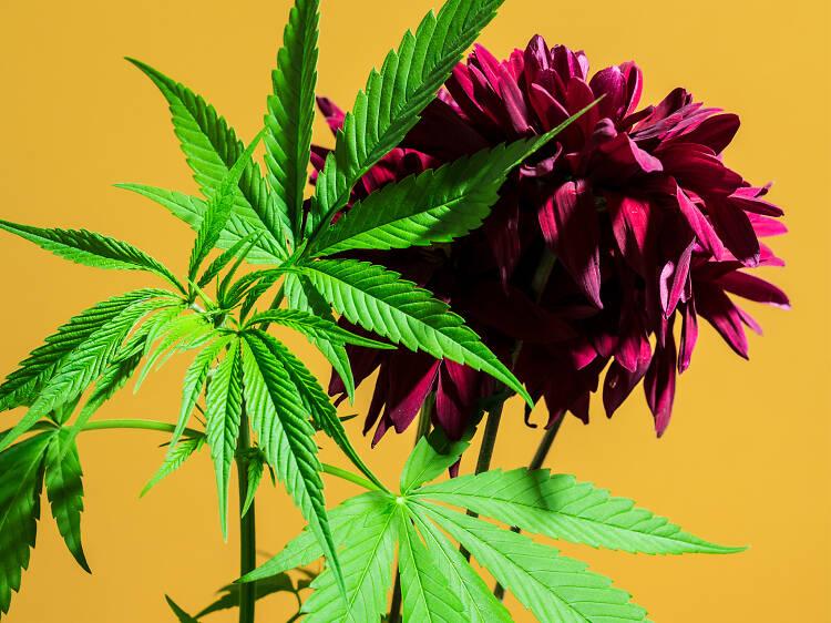 6 proyectos de cannabis en la CDMX que debes conocer