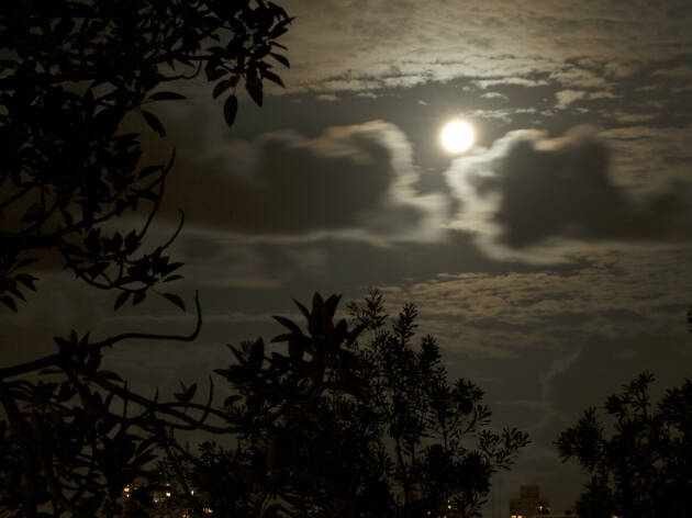 Image of the moon in the Royal Botanic Garden.