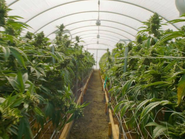 The Legend of 420, documental sobre el cannabis en Netflix