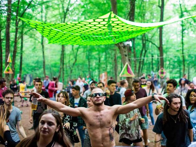Forestation Festival