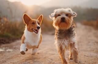 sítios para adoptar cães em Lisboa