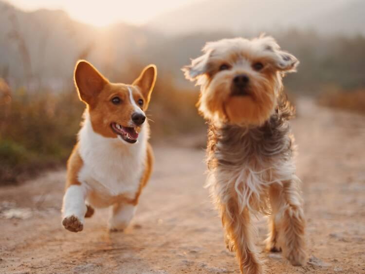 Sítios para adoptar cães em Lisboa e ganhar um amigo para a vida