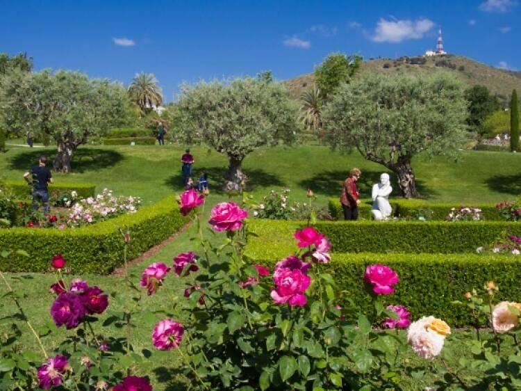 Rosaleda del Parc de Cervantes