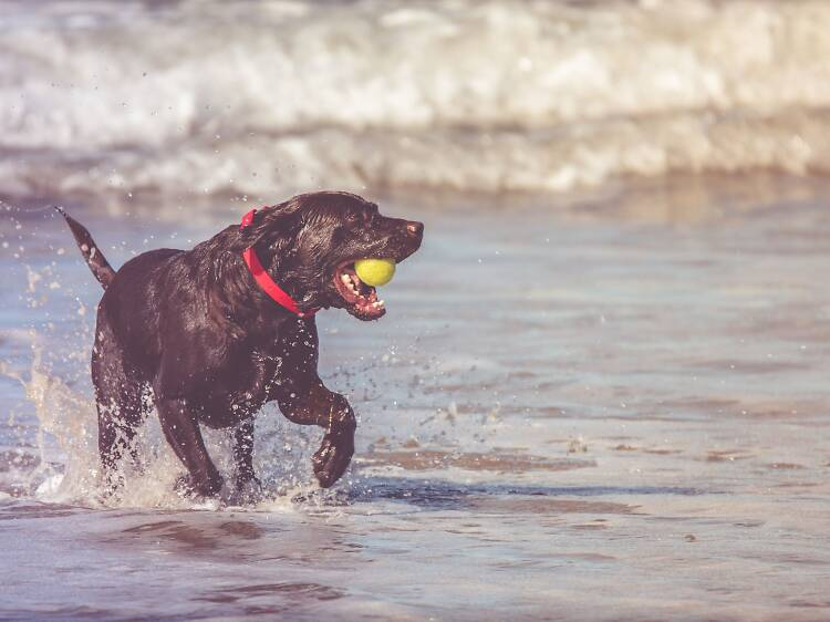 Praias pet friendly perto de Lisboa para brincadeiras dentro e fora de água
