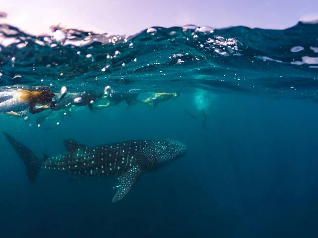 Nadas con tiburones