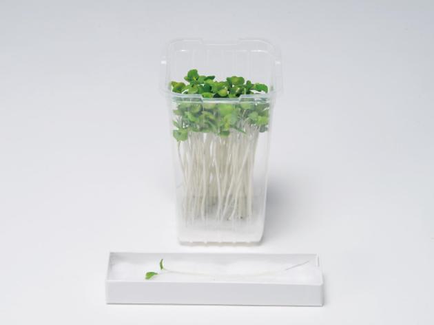紙わざ大賞展——「紙」の可能性を追求するアートコンペティション