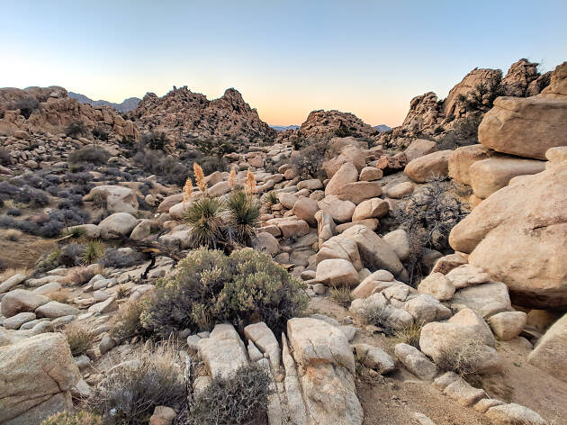A guide to Joshua Tree