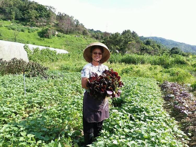 菜園農業先鋒田:慈心種植