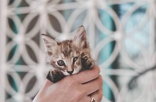 Participe na primeira Caminhada Felina Colorida e contribua para a causa animal