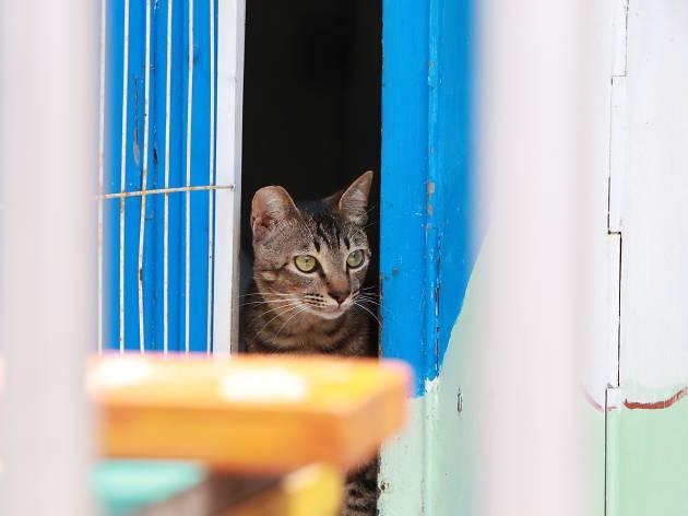讓香港鎮店貓治癒你的心情!